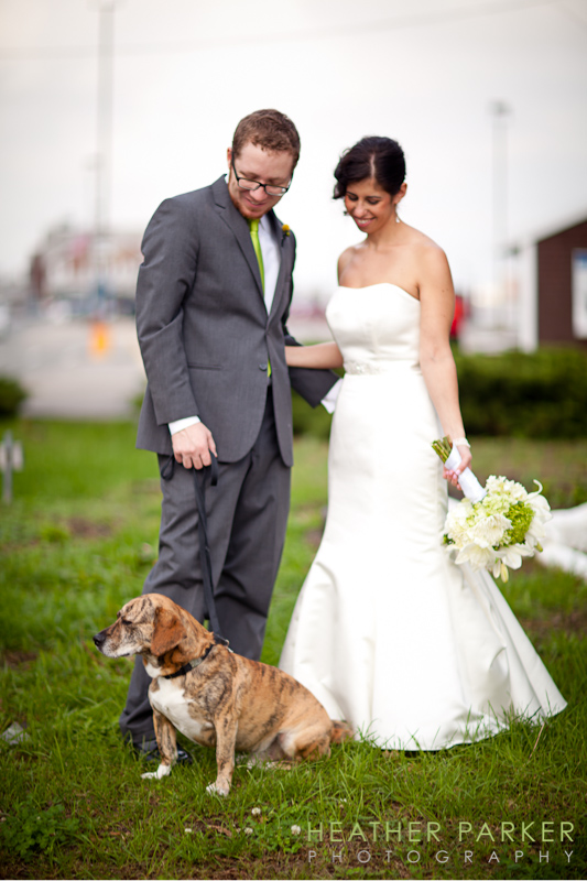 wedding beagle