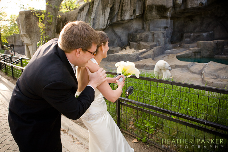 polar bear wedding